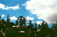 LA National Forest